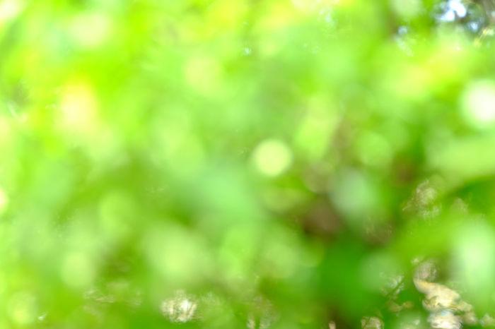 bokeh background outfocus Background Blackandwhite Bokeh Close-up Day Defocus Garden Green Leaf Leaves Nature Outdoors Outfocus Park Plant Selective Focus Tree