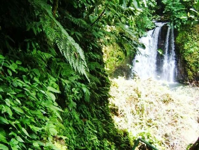 Welcome To The Jungle JungleExperience Jungle Taking Photos Photo Chuteeeee 🌿🌊💚