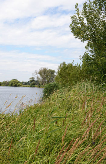 Havel river at summer time (Brandenburg, Germany). river landscape. Beauty In Nature Brandenburg Day Green Green Color Growth Havel Havelland Havelland Germany Idyllic Nature No People Non Urban Scene Non-urban Scene Outdoors Plant Remote Scenics Sky Tranquil Scene Tranquility Tree