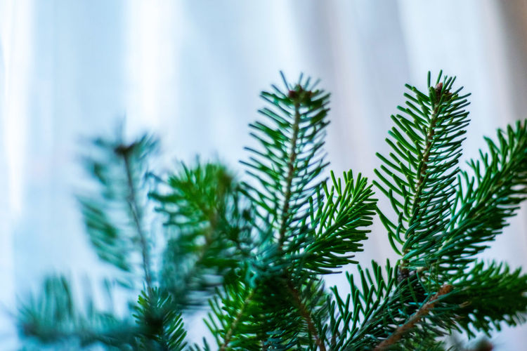 A New Perspective On Life Plant Growth Tree Close-up Green Color Focus On Foreground No People Nature Pine Tree Day Beauty In Nature Selective Focus Plant Part Coniferous Tree Needle - Plant Part Cold Temperature Branch Tranquility christmas tree Christmas