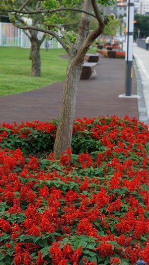 bunga Tree