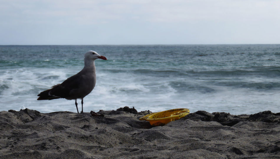 Seagull and kid's toy, Carlsbad Beauty In Nature Bird Cloud Day Focus On Foreground Frisbee Holiday Horizon Over Water Idyllic Kids Toys Nature No People Ocean Outdoors Rock - Object Scenics Sea Seagull Shore Sky Tranquil Scene Tranquility Water Fine Art Photography Colour Of Life