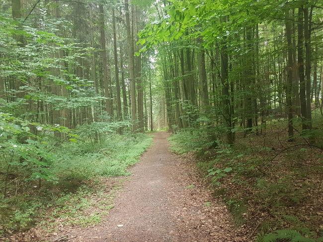 Waldweg Tree Forest Tree Area Countryside WoodLand Woods