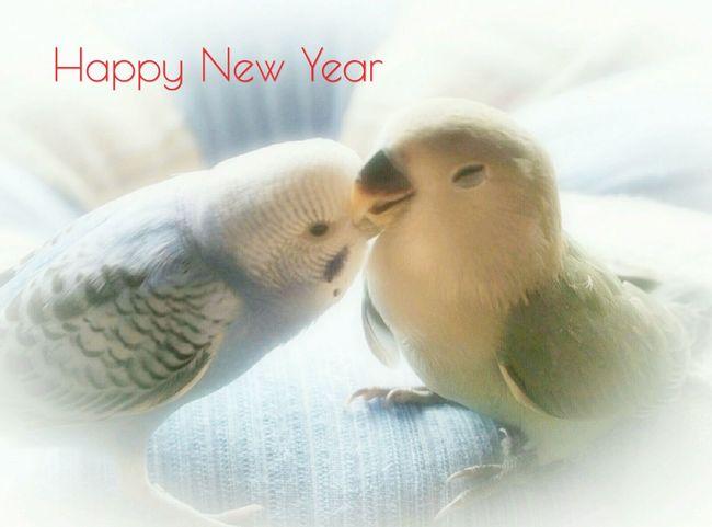 あけましておめでとうございます。今年もよろしくお願いします😊ニワトリ見つかりませんでした💦 Happy New Year! 酉年 Bird Kiss ℃-ute Nature 日だまり EyeEm Best Shots Birds_collection Bird Photography 仲良し インコ