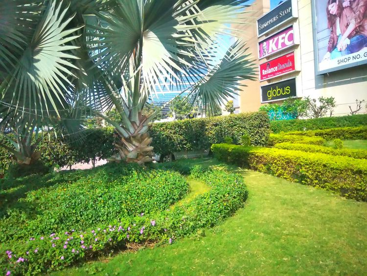 Green Color Palm Tree Growth Outdoors Nature Grass No People Day Beauty In Nature Tree Out Shopping Daylight Garden in Aurangabad, India Le2 LeEco LeEco Le2 Le2 Camera