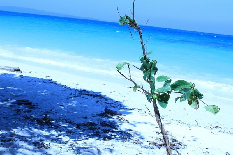 Nature's Beauty Nature's Love Sky Water Surface Plants 🌱 Sea Beach And Sky