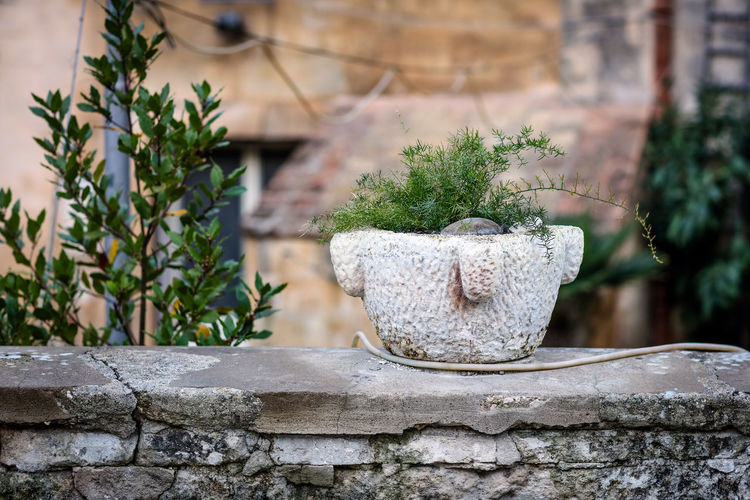 Planter Matera Matera Italy Matera2019 Matera - Capitale Della Cultura Matera View Plant No People Growth Potted Plant Day Built Structure Wall Outdoors Stone Material Concrete Stone Wall Travel Travel Destinations