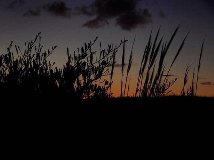 -Contraste 2- Medanos Dune Dunes Sanddunes Contrast Sunset Dusk Plants Sky Skyintwocolours Audiovisualuruguay Igersuruguay Igerspostales Uruguaynatural Uruguay_estrella Uruguay_pais Picturemysky Gatewaytosouthamerica Americasplendorosa Postalesdeverano H2o_natura