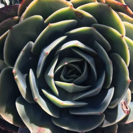 Green flower Beauty In Nature Green Color Growth Succulent Plant Plant Close-up No People Nature Full Frame Natural Pattern Day Freshness Cactus Backgrounds Pattern Spiral Botany High Angle View Flower Vulnerability