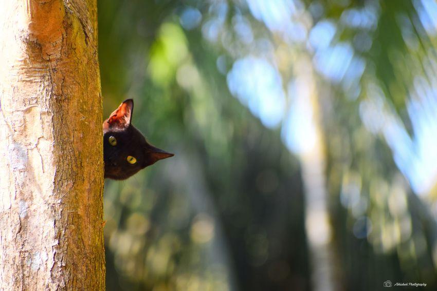 meow Tree Cat Black Cat Peeking Clicked On Nikon D3300 No People