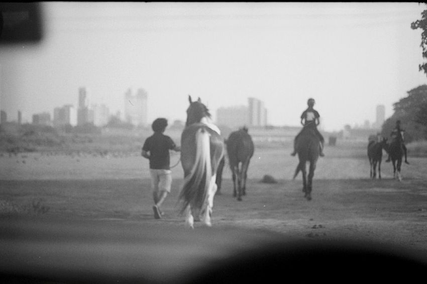 Regal. Men Rear View Focus On Foreground Person Domestic Animals Hobbies Outdoors Fresh On Eyeem  Blackandwhite Photography 35mm Film Horse Riding Horseriding Equestrianphotography Horses Animals 35mm Black And White Day Monochrome Photography