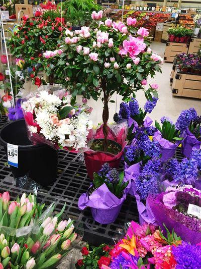 Flowers Pink Purple Plants Pretty