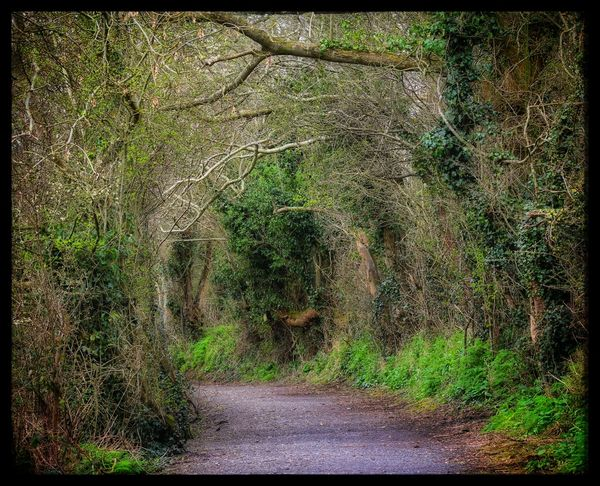 Whats Around The Corner? Country Path Tow Path Tunnel Of Trees Surrounded By Trees Nature Walk Showcase April Our Best Pics EyeEm Gallery Background Trees EyeEm Best Shots Nature_collection EyeEm Best Shots - Nature Landscape Exceptional Photographs Country Life Spring Is Here