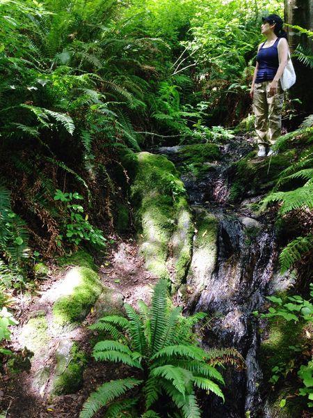 The Portraitist - 2016 EyeEm Awards The Traveler Outdoors Washington State Very Green