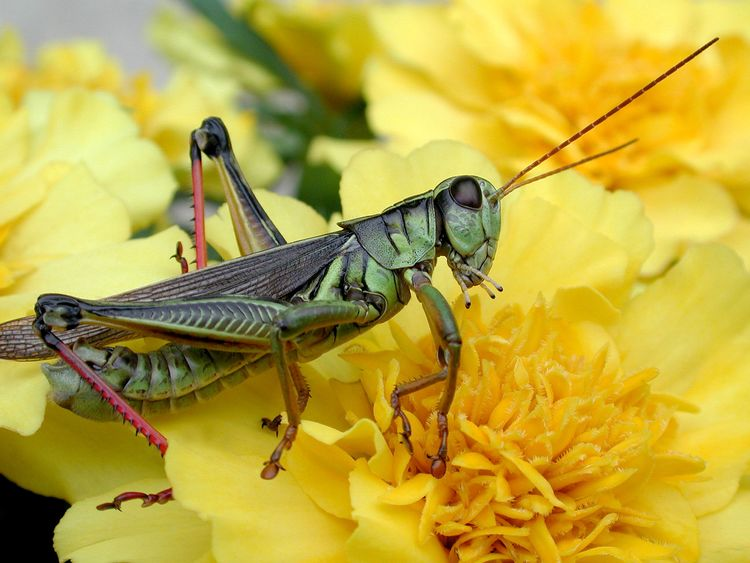 Animal Animal Themes Animal Wildlife Animal Wing Animals In The Wild Beauty In Nature Close-up Flower Flower Head Flowering Plant Focus On Foreground Fragility Freshness Insect Invertebrate Nature No People One Animal Outdoors Petal Plant Pollination Vulnerability  Yellow