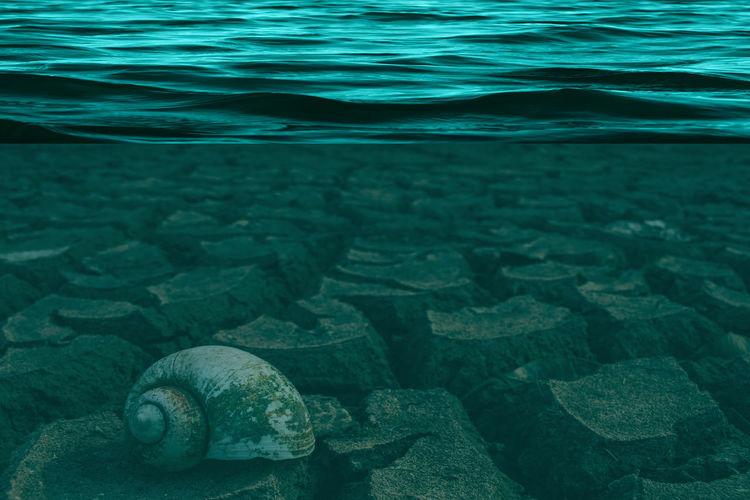 Snail in sea