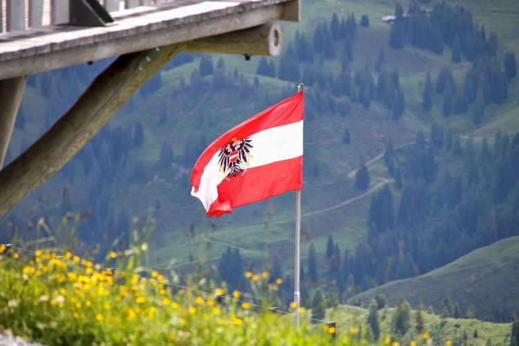 Red flag on plant against mountain range