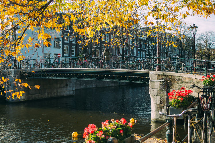 Water Bridge Autumn Outdoors Amsterdam Canal Netherlands Fall Leaves Tree