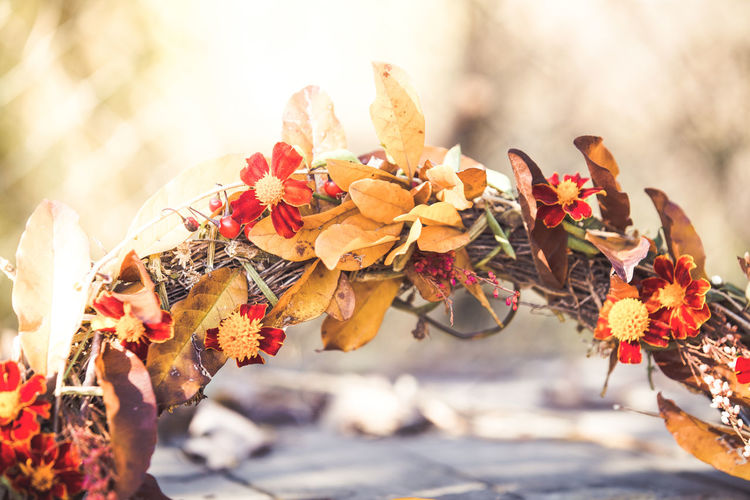 Autumn handmade wreath Flower Flowering Plant Plant Nature Day Vulnerability  Fragility Beauty In Nature Freshness Flower Head Outdoors Close-up Autumn Fall Autumn Wreath Fall Wreath Handmade DIY