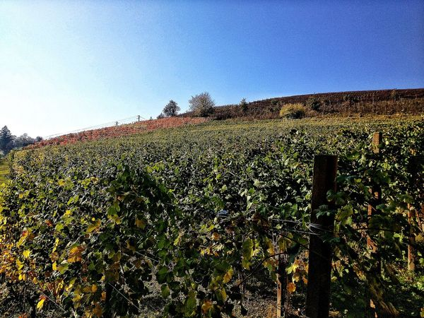 Panorama Vineyard Roero