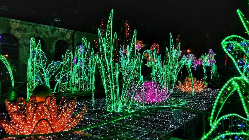 Illuminated Green Color Night Multi Colored Christmas Decoration Outdoors Photography Poland Warsaw Warszawa  Wilanów Wilanow Garden Festiwalswiatla Lightsfestival Traveltheworld Aroundtheworld Lights In The Dark Lights Light Effect Ilumination Fantasy Likeit Polska