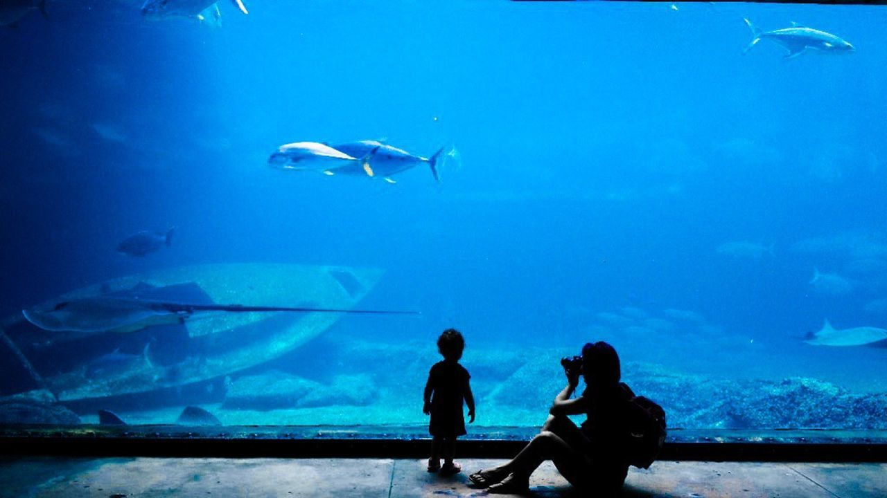 water, fish, real people, silhouette, leisure activity, sea life, swimming, two people, underwater, men, aquarium, togetherness, sitting, nature, sea, blue, women, day, beauty in nature, undersea, outdoors, people, adult