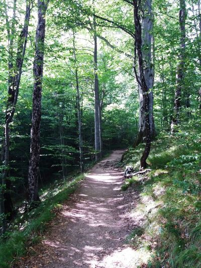 Camins Arbres Bosc Ways Tree Forest Nature Outdoors Beauty In Nature Day No People Tree Trunk Tree Area Sky Green Color Summer Tranquility
