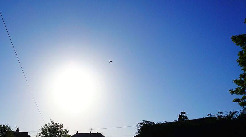 Sun day Sony XZ Spread Wings Seagull Shining Sea Bird Flapping
