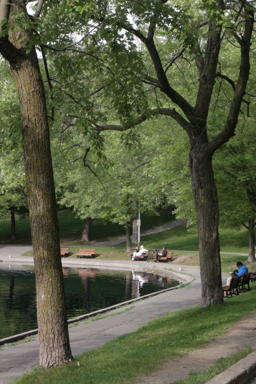 VIEW OF PARK BY LAKE IN SUNLIGHT