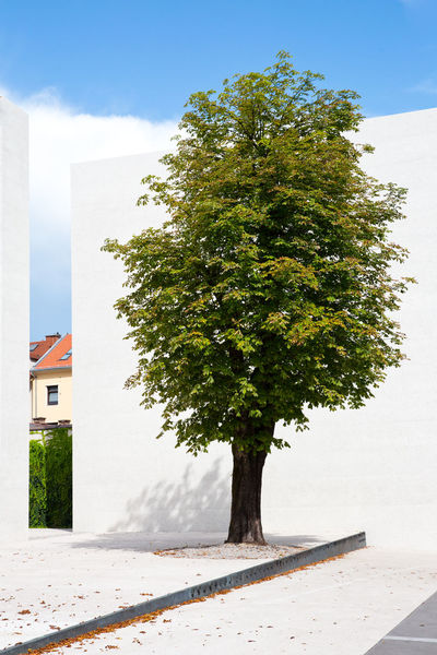 Tree Plant Architecture Built Structure Building Building Exterior Nature Day Growth No People Sky Outdoors Green Color Sunlight Clear Sky House Wall - Building Feature Shadow White Color Residential District White Wall Blue Sky Summer Gap One Tree