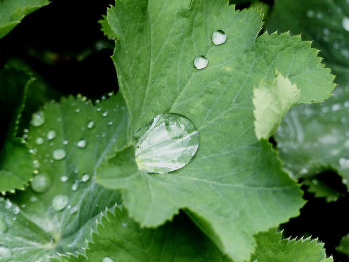 Wassertropfen Water Leaf Drop Social Issues Backgrounds Close-up Animal Themes Plant Green Color