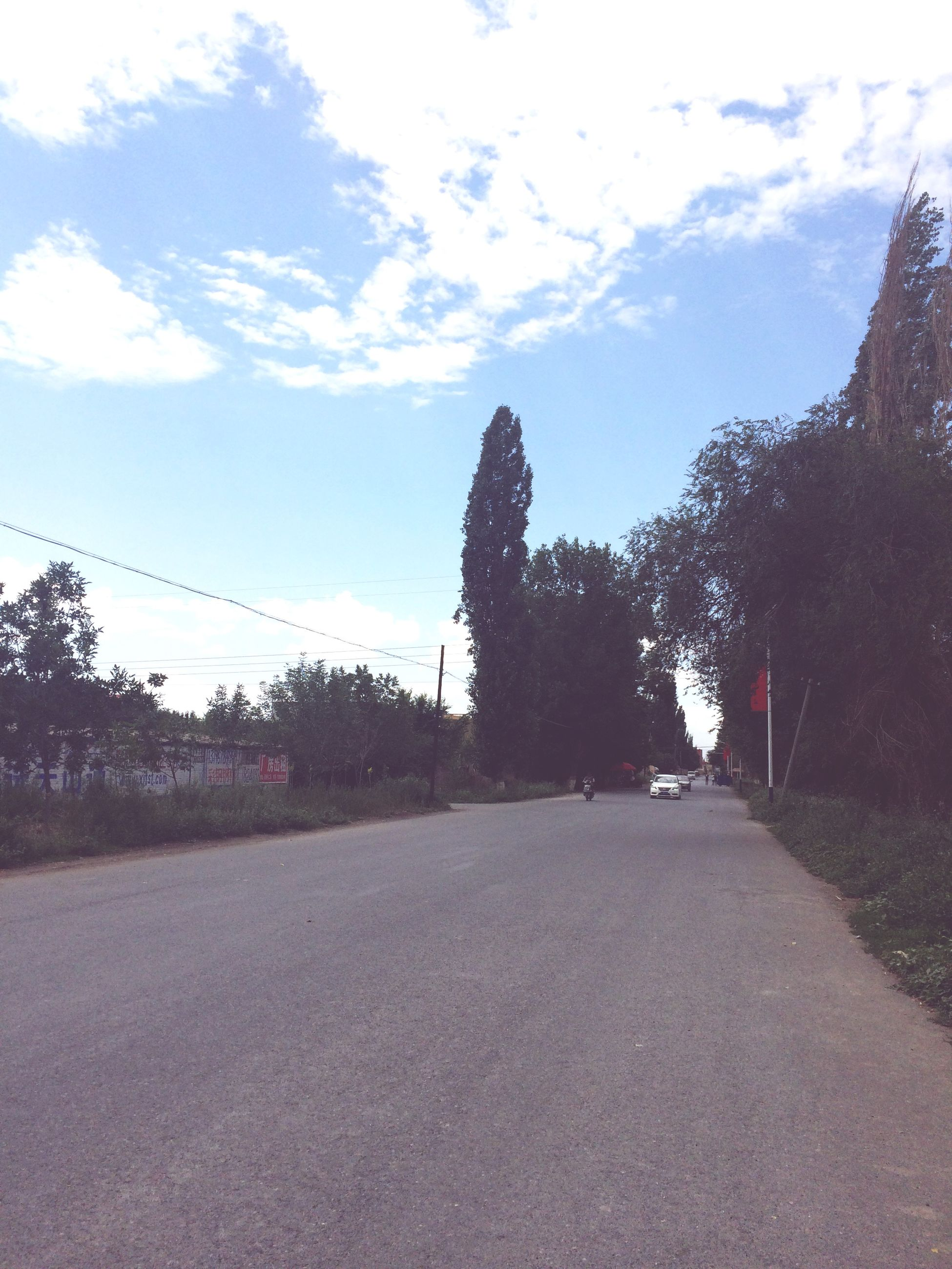 tree, sky, the way forward, road, transportation, diminishing perspective, cloud - sky, street, tranquility, cloud, nature, vanishing point, day, growth, tranquil scene, outdoors, empty, built structure, sunlight, no people