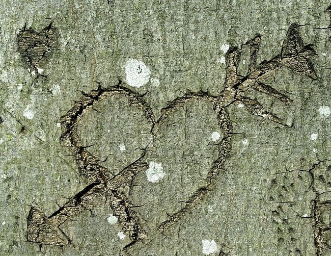 Valentine's Day  Close-up Treebark Carved Heart In Treebark Longlastinglove Nature Day No People Heart With Arrow