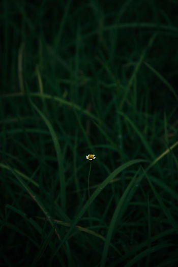 White flower head in green grass field. Alone Grass Green Green Color Lonely Blade Of Grass Close-up Field Flower Flower Head Foliage Grass Grass Flowers Green Color Green Fields Green Foliage Green Leaf Green Leaves Growth Leaf Leaves Nature Plant White Flower A New Beginning