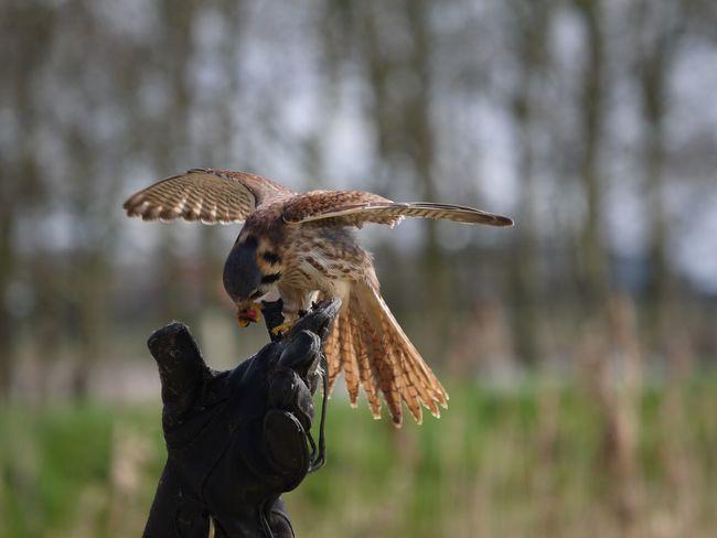 Bird Spread Wings Nature EyeEmNewHere