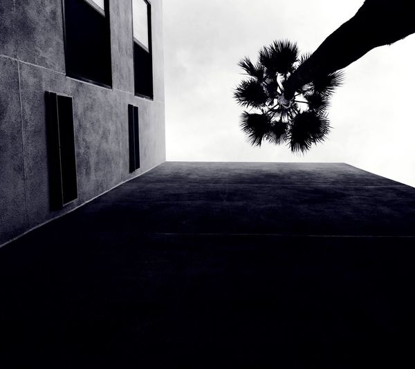 IPhoneography IPhone Photography Mobilephotography Travel Photography Architectural Detail Urban Geometry Architecture Light And Shadow California Mobile Photography Obscura Camera App Perspective EyeEm Buildings Streetphotography Street Photography Architecture_collection Rands Noir Black & White Hotel Iphoneonly IPhone 6s Plus Angles Lookingup