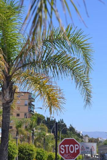 Malaga Malaga