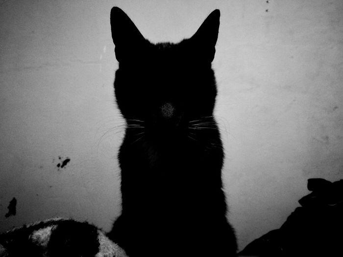Darkness And Light Cat Migatomodelo