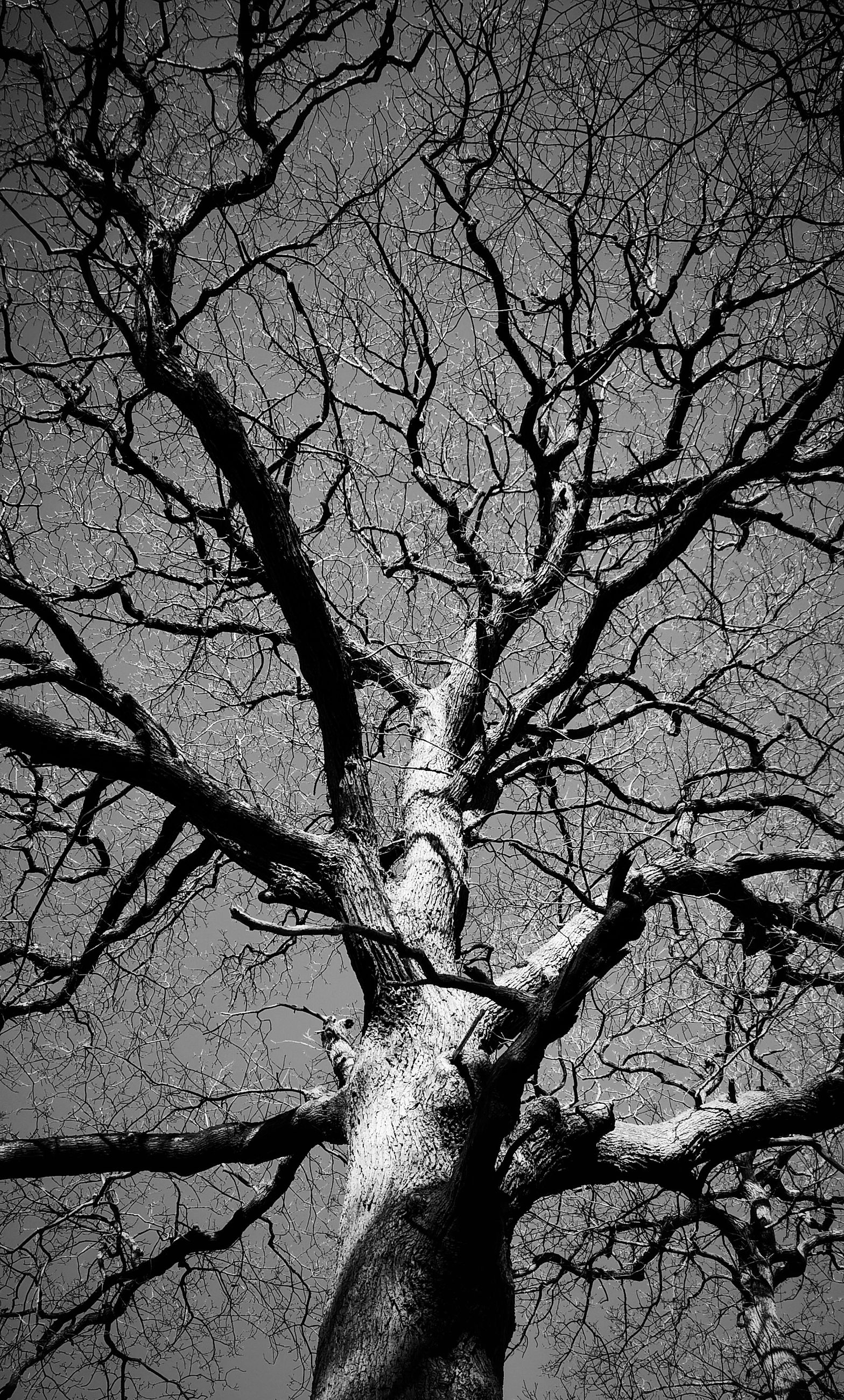 bare tree, tree, branch, nature, tree trunk, trunk, plant, tranquility, no people, sky, low angle view, dead plant, day, outdoors, beauty in nature, non-urban scene, scenics - nature, land, environment, tranquil scene