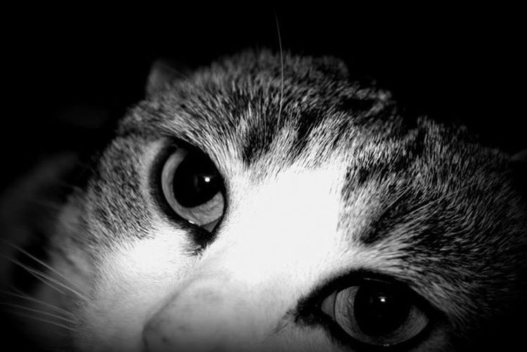 my cat Cat Cats Blackandwhite Taking Photos
