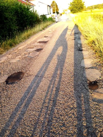 Tree Shadow Road Sunlight Sky