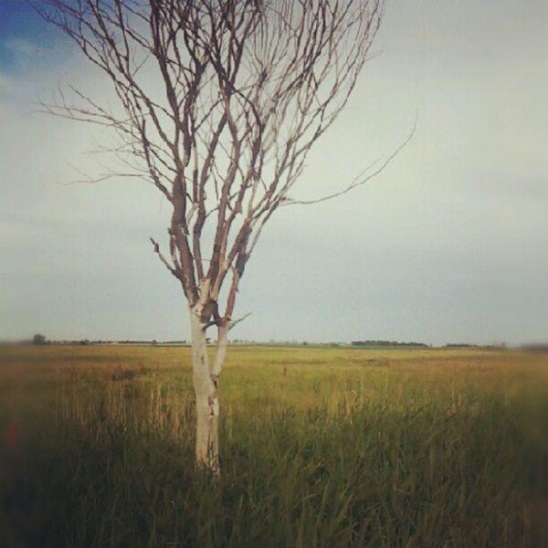 Hevesi Füves Puszták Tájvédelmi Körzet Tree Trees Puszta Steppe pampa summer
