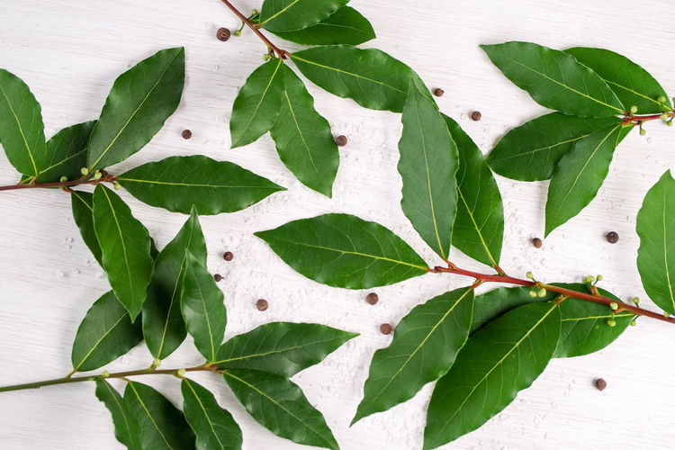Directly Above Shot Of Curry Leaves On Table