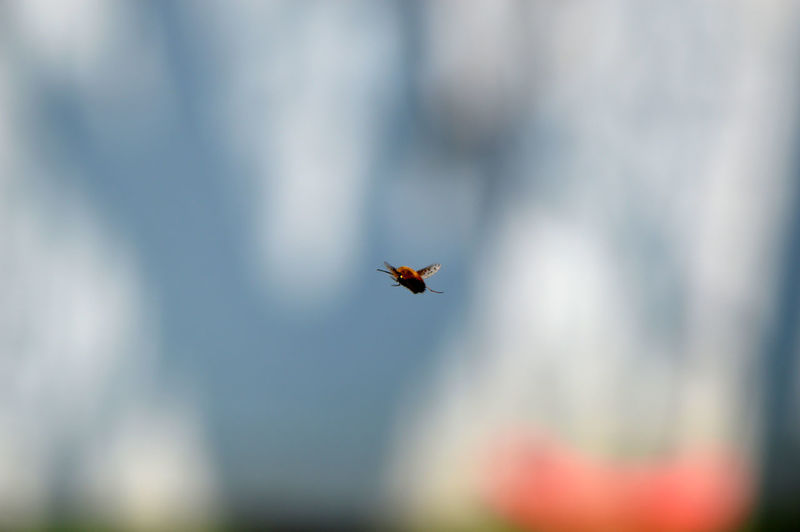 Hovering bee fly... Flying One Animal Animals In The Wild Insect Animal Themes Animal Wildlife Mid-air Outdoors Day No People Nature Beauty In Nature Close-up Bee Fly Wollschweber In Flight Hovering Insects  Animals Simplicity Minimalism Spring Shadow Tranquil Scene Capture The Moment The Great Outdoors - 2017 EyeEm Awards