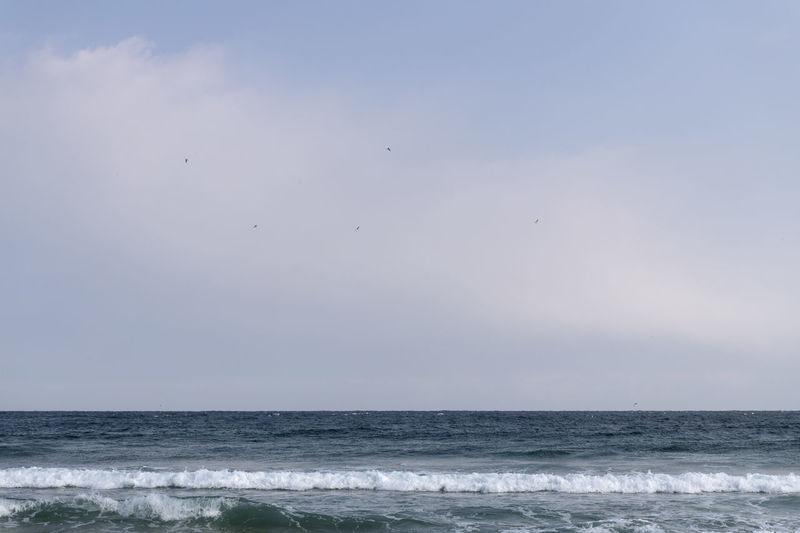 Hwajinpo Beach in Goseong, Gangwondo, South Korea Beach Land Water Beauty In Nature Outdoors Hwajinpo Beach Winter Beach Winter Sea Tranquil Scene Naturelovers Natur's Beauty Sea Horizon Over Water Sky Horizon Scenics - Nature Nature Motion Wave Clear Sky Tranquility No People Day Bird