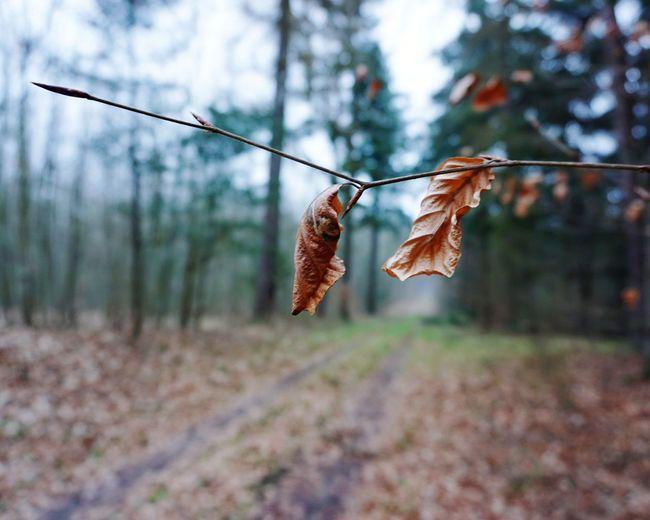 Leaf... EyeEm