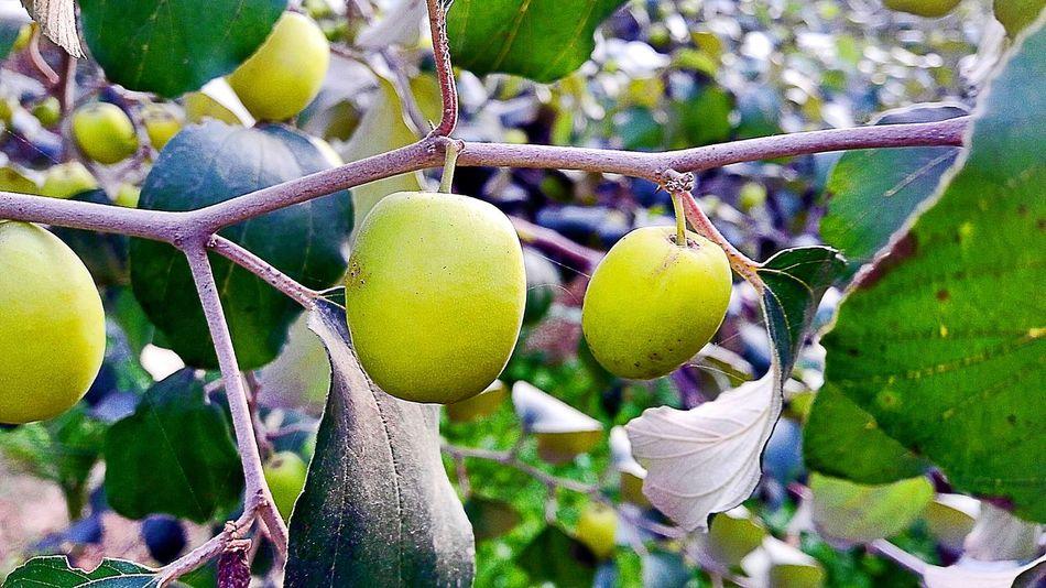 Fruit Mobilephotography SamsungJ7 Pakistanphotochallenge Beautiful Trees Eyeem Pakistan In Pakistan Without Filters Nawanlahore Beauty Of Nature