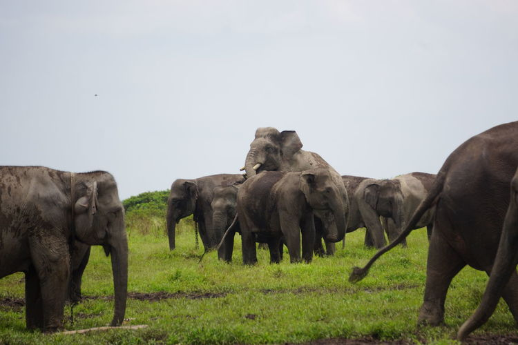 elephant meeting at the forest Animal Animal Themes Mammal Group Of Animals Animal Wildlife Animals In The Wild Elephant Grass No People Plant African Elephant Herd Nature Animal Body Part Safari Outdoors Animal Trunk Day Side View Animal Family