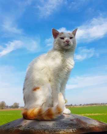 Animal Themes One Animal Animals In The Wild No People Mammal Sky Grass Polar Bear Animals In The Wild Domestic Cat Black Color Portrait Domestic Animals Looking At Camera Yellow Eyes Beauty In Nature Eyemphotography Cloud - Sky Katzenfoto Katzenliebe Katzen 💜 Katzen Katze Catlovers Cat♡