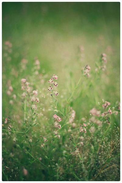 なんか寂しいので、花でもと思い。 Enjoying Life Taking Photos EyeEm Japan Nature 草花 自然